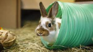 Good Practice Code for Rabbit Welfare Launched